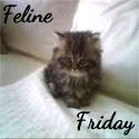 FelineFriday