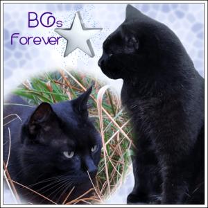 BGs-ForeverMarg
