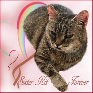 Sister-Kit-Forever-