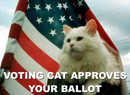 voting-cat