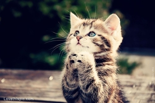 Praying-Cat