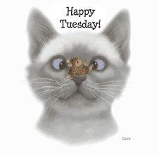 TuesdayFun